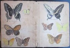A Guide to the Mammals, Birds, Batrachians, Reptiles, Fish, Lepidoptera, and Mushrooms of (Primarily) Western New York State. Handwritten and Illustrated by Gerritt S. Miller, Jr., a Biologist at the Smithsonian Institute by manuscript]; Miller, Gerritt S. (1869-1956): 1900-1920, Albany Paperback - Sanctuary Books, A.B.A.A.
