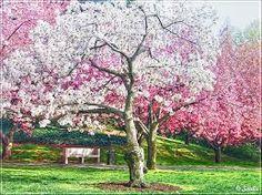 Resultado de imagen para primavera