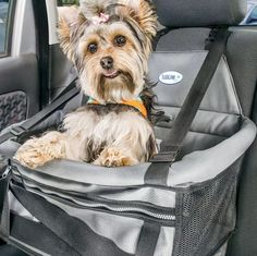 Cadeirinha de Carro para Cachorro. #cadeirinhadecarroparacachorro #cachorro #filhode4patas #maedepet #paidepet #petshop #petmeupet