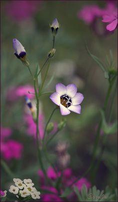 wild bloempje... | Natuur foto van annelies | Zoom.nl