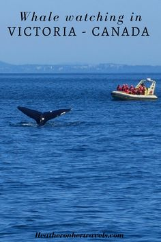 Whale-watching is one of the most popular things to do in Victoria, Canada, through the months of April to October and it's an all-round nature experience. Vacation Trips, Dream Vacations, Stuff To Do, Things To Do, Popular Things, Victoria Canada, Canada Destinations, Western Canada, Visit Canada