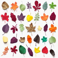 A collection of leaves made ​​of paper