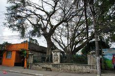 """A árvore mais antiga de São Paulo corre riscos. Localizada na Estrada das Lágrimas, entre os números 515 e 530, próxima da Rodovia Anchieta, no Sacomã, ela está completamente abandonada pelo poder público. Conhecida como A Figueira-das-Lágrimas, a árvore é a mais antiga documentada na cidade de São Paulo: Dom Pedro I passou por sua...<br /><a class=""""more-link"""" href=""""https://catracalivre.com.br/sp/muito-mais-sao-paulo/indicacao/voce-conhece-a-arvore-mais-antiga-de-sao-paulo/"""">Continue lendo…"""
