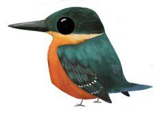 African Pygmy Kingfisher Chloroceryle aenea #206