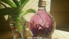 Glass Vase, Alcohol
