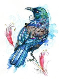 Tui! These New Zealand birds are gorgeous. I love the white feather tuft on the throat, especially.  India ink, watercolor, and Tombow marker.