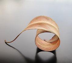 Fallen leaf, already curled and shaped into a ring. Maria Apostolou.