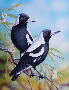 Eastern Spinebill by Lyn Cooke Australian Animals, Australian Artists, Black Bird Tattoo, Watercolor Paintings For Beginners, Watercolor Animals, Watercolor Bird, Indigenous Art, Bird Drawings, Bird Pictures