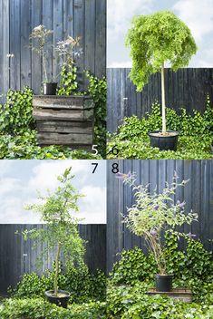 Diverse kleine bomen in pot