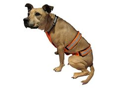 Dog Hunting Vest UnderBelly and Chest Protection MEDIUM *** To view further for this item, visit the image link.