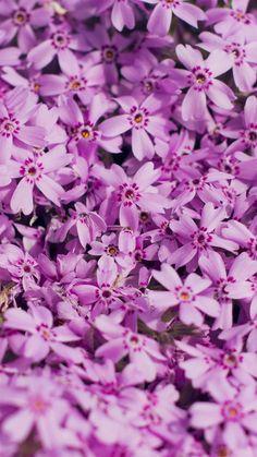 Violet-Flower-Nature-Party-Spring-Blossom-iPhone-6-wallpaper-ilikewallpaper_com_750.jpg (750×1334)