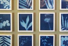 Make botanical artwork from light sensitive paper and Kenneth Wingard's tips.