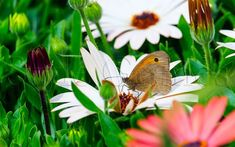 Wonderful Flowers Puzzle- screenshot Wonderful Flowers, Amazing Nature, Animals, Animaux, Animal, Animales, Animais
