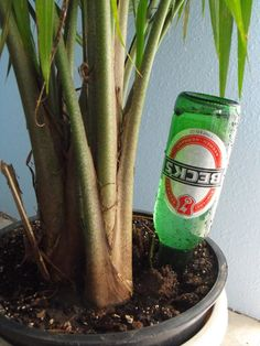 Keep your houseplants alive while on vacation. (No, not with beer!)