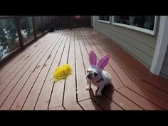 Easter BunnyTryouts - Which Dog Will Become This Year's Winner? - YouTube