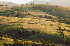 Morning fields