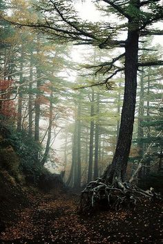Aokigahara in Japan | Stunning Places #Places