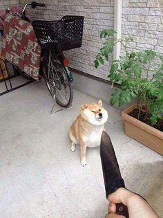 the chungo's friend dog, dungo