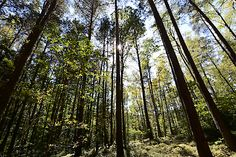 "Presseausflug ins Mühlviertel ""Waldluftbaden"" Austria, Plants, Wellness, Woodland Forest, Viajes, Pictures, Culture, Health, Plant"
