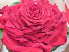 red glamelia