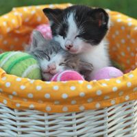 25 Easter cat pictures