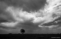 Tree Clouds, Landscape, Outdoor, Outdoors, Scenery, Outdoor Games, The Great Outdoors, Corner Landscaping, Cloud