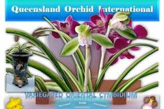 Promoting diverse interchange of sciences, arts, ideas and cultures pertaining to orchids via dynamic, interactive formats with an international horizon. Growing Orchids, Oriental, Wordpress, Joy, Plants, Planters, Plant