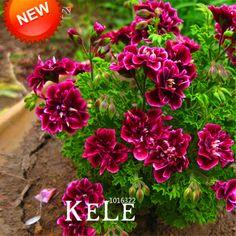 Vente! 20 PCS/Pack Crimson Fleur Pétales Géranium Graines, De Fleurs vivaces Graines Pelargonium Peltatum Fleurs, # WM9T73