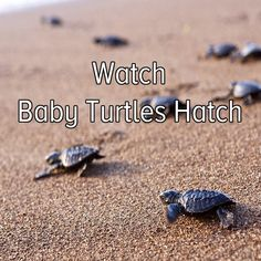 Bucket list: go to a beach and watch baby turtles hatch. I can gladly check that off my list as well.