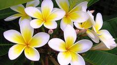 Cây Xanh Bạch Long- cung cấp cây giống lâm nghiệp, cây công trình, cây b...