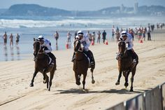 Three horses work down the beach at Surfers Paradise at this morning's Magic Millions Barrier Draw! — with Jamie Lee Kah, Calabrese Gino, Blake Spriggs and Tim Bell in Surfers Paradise. QLD AUSTRALIA