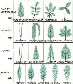 potus fotos tipos  Buscar con Google  Arboles plantas y flores