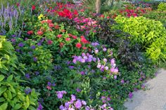 This view of the bed shows the black and chartreuse sweet potato vines, violet verbena and salvia, lavender petunias, deep pink geraniums and coral pink zinnias