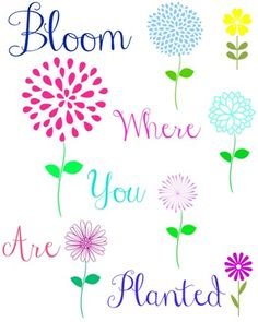 Bloom where you are planted FREE PRINTABLE!