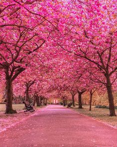 A Pink Road. Cherry Blossom Trees at Greenwich Park Beautiful World, Beautiful Gardens, Beautiful Places, Beautiful Pictures, Belle Image Nature, Frühling Wallpaper, Tree Tunnel, Greenwich Park, London Photographer