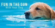 We love sharing the sun with our best fur-friend! Check out these great summer activities. https://www.sitstay.com/blogs/good-dog-blog/outdoor-summer-dog-activities?utm_campaign=coschedule&utm_source=pinterest&utm_medium=SitStay%20Dogs