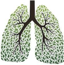 images of lungs - Google Search
