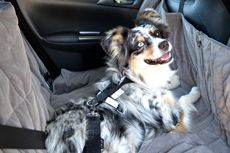 One of the safest dog car harnesses ever to be designed available in the US through Mighty Mite Dog Gear. This is the Allsafe Harness! http://www.mightymitedoggear.com/dog_travel_car_accessories.html