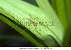 Soft Focus of of Lynx Spider Under Leaf - Wildlife Animal Nature Macro Close Up