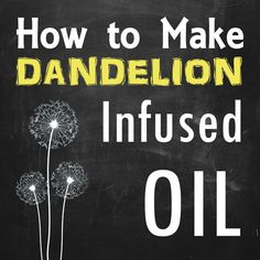 Step by Step How to Make Dandelion Infused Oil. Include making dandelion oil, when to harvest, how to dry flowers and using dandelion oil.