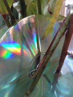 De kleuren in een cd-tje van de zo'n #synchroonkijken dag 4
