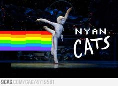 Nyan Cats! Nyan Cat, Best Funny Pictures, Clever, Manga, Memes, Cats, Anime, Movie Posters, Gatos