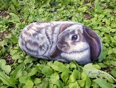 A lop eared rabbit hand painted on rock by Ernestina Gallina Stone Art