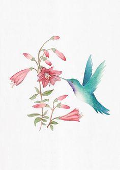 IL·LUSTRACIÈNCIA: Colibrí bebiendo el néctar - Mora Langer