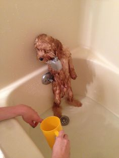 Little Shi-Poo doesn't like bath time.  This cracks me up, I think Penny would do this if she thought about it!