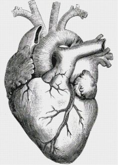 This might be fun...looks like a ton of work..  Heart with Ventricles Illustration PDF Handmade Cross-Stitch Pattern