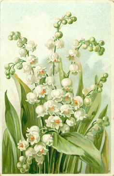 Lily of the valley - Vintage postcard, 1908