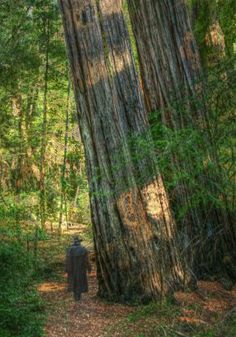 As the oldest state park in California (established 1902), Big Basin Redwoods State Park protects a grove of ancient coast redwoods similar to those found in Muir Woods National Monument. Both areas are an easy drive from San Francisco.