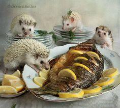 Afbeeldingsresultaat voor domesticated hedgehog