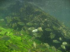 St. Andrews State Park: Snorkeling 1